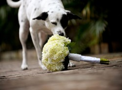 Key West Wedding - Dog and Bouquet