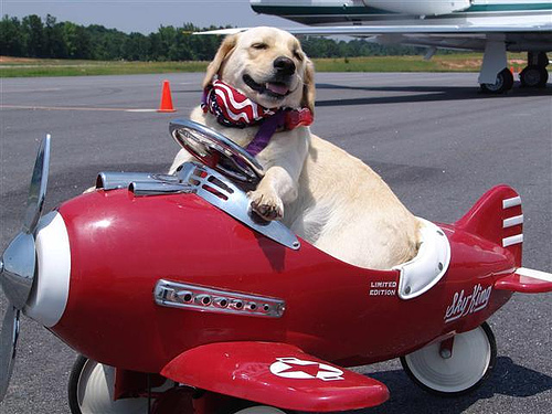 flying with a dog to key west old town manor travel blog